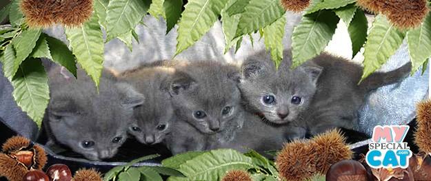 I Certosini nascono sotto le foglie di castagno…
