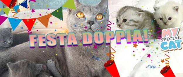 FESTA DOPPIA nel vostro Allevamento di felini!! Cuccioli pronti per essere adottati :-)